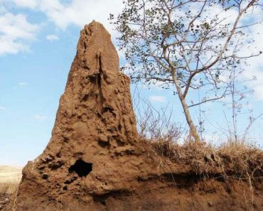 termite mound and view of a sky