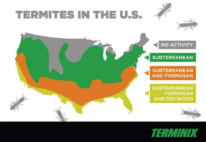 what states have termites