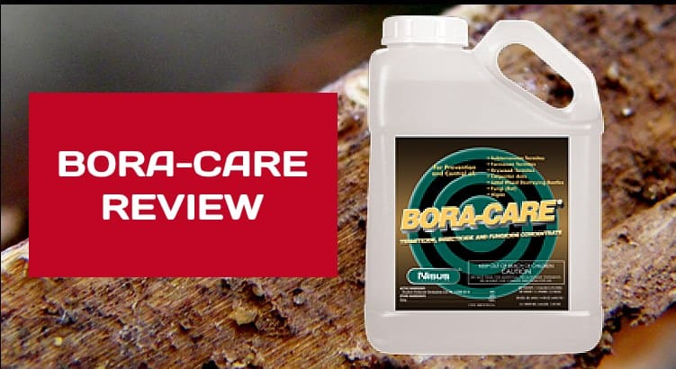 Bora Care Termite Treatment Review